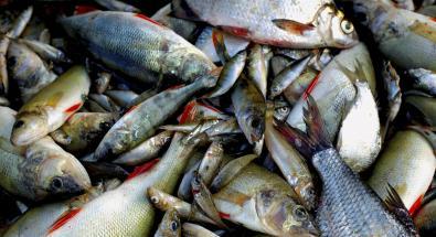 Acquacoltura e inquinamento: un rischio per la qualità del...